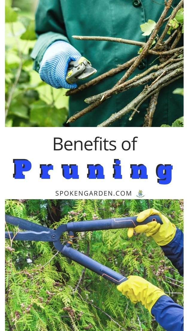 Benefits of pruning with text overlay
