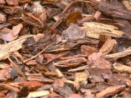 Fall Mulching Do's and Don'ts – DIY Garden Minute Ep. 116