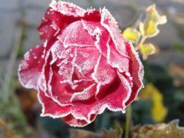 Winter Garden Fertilizing, Simplified – DIY Garden Minute Ep. 36