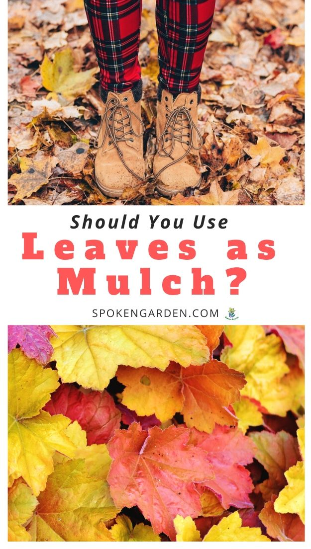 Using leaves as mulch