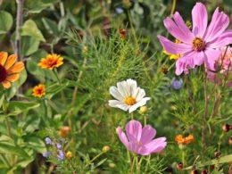 3 Garden Goals for the New Year – DIY Garden Minute Ep. 126
