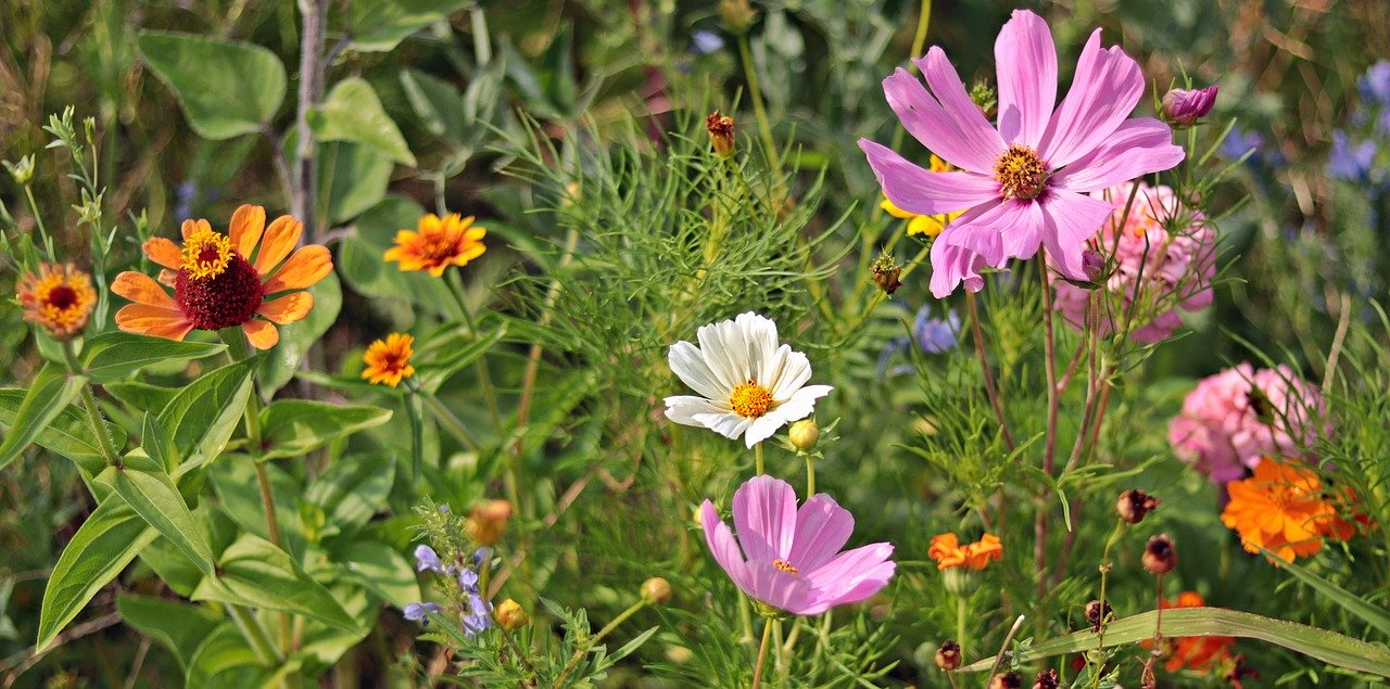Wild flowers in bloom in outdoor garden bed.