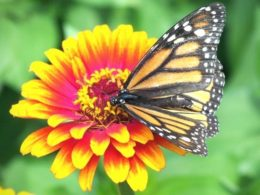 Want to Add More Pollinators to Your Spring Garden? Do These 6 Things – DIY Garden Minute Ep. 132