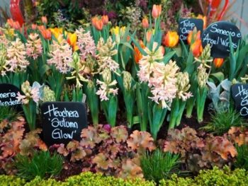 New Products and Fresh Ideas: Inspiration from the Northwest Flower & Garden Festival – Ep. 48