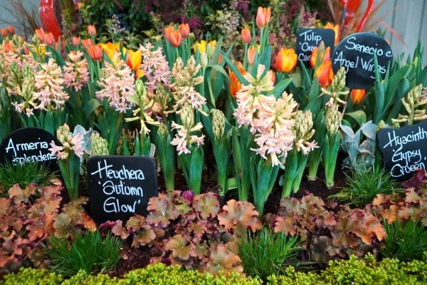 Layers of spring hyacinths, tulips, heuchera, and more in a spring garden design