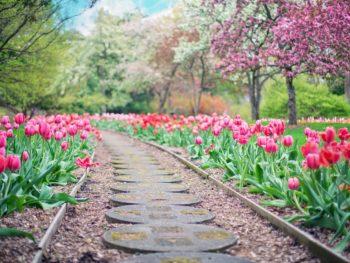 Spring Mulching Reminders – DIY Garden Minute Ep. 138