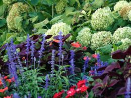 Designing Your Garden with Texture Anytime of Year