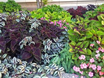 How to Choose the Right Plant for Your Garden This Spring – Ep. 49