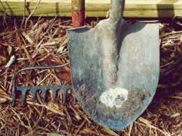 A rake and shovel together standing up on top of hay or straw bed.