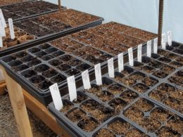 What is Plant Propagation? – DIY Garden Minute Ep. 139