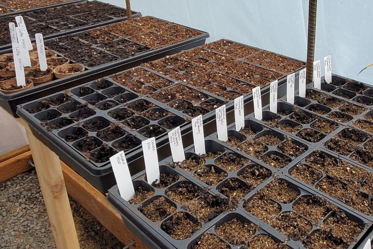 Seed starting trays laid out for plant propagation
