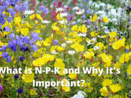 What is N-P-K & Why You Should Know? – DIY Garden Minute Ep.156