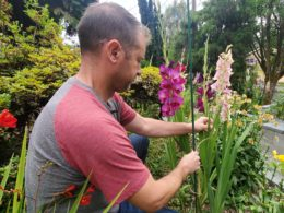 5 Flower Staking Mistakes to Avoid This Summer – DIY Garden Minute Ep.157