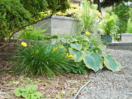 3 Helpful Reasons Why Planting Perennials in the Fall is Important