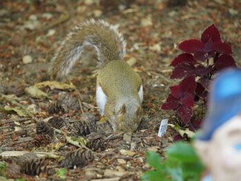 Who Are the Top 5 Garden Critters Eating Your Garden Bulbs? – DIY Garden Minute Ep.163