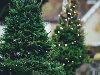 7 Ways to Repurpose Your Christmas Tree – DIY Garden Minute Ep.177