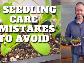 3 Mistakes to Avoid When Caring For Your Seedlings – DIY Garden Minute Ep. 186