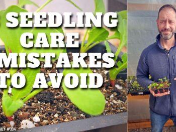 Plant seedlings in starter packs.
