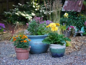 Container Gardening: Why It's Different Than Ground-Bed Gardening – DIY Garden Minute Ep. 192