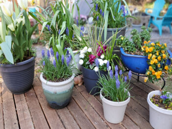 A grouping of containers each filled with plants showing space around them to emphasize the ideas in this podcast.