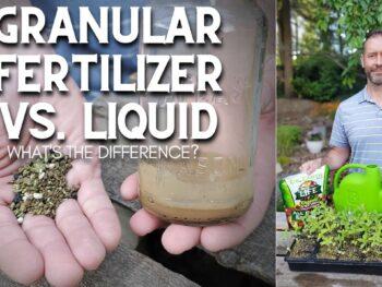 Granular vs Liquid Fertilizers – DIY Garden Minute Ep. 198