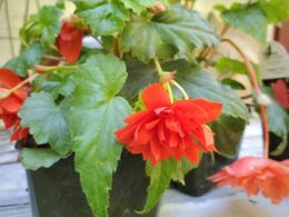 May Gardening Tips – Spoken Garden Monthly Newsletter May 2021