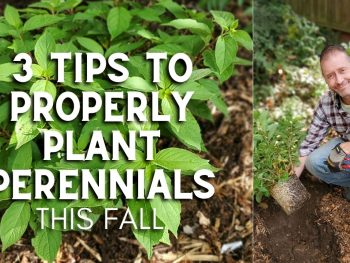 3 Tips to Properly Plant Perennials This Fall – DIY Garden Minute Ep.211